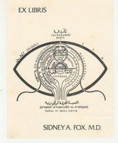 sidney a. fox, m.d.