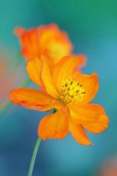 Délicates | Bellatchitchi | Flickr