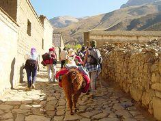 SEE the beautiful Argentina Llama trekking - Tilcara, Argentina San Salvador, Ushuaia, Latin America, South America, Patagonia, Bolivia, Travel Words, Argentina Travel, Adventure Awaits