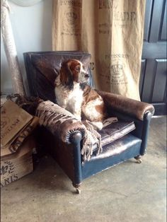Even the shop do fits the decor. Love this blue leather chair