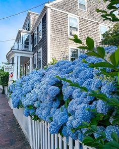 Hortensia Hydrangea, Hydrangeas, Summer Garden, Home And Garden, Stunning View, Flower Prints, Garden Landscaping, Landscape Photography, Lawn