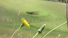 Una mosca descansando/Suesca Cundinamarca