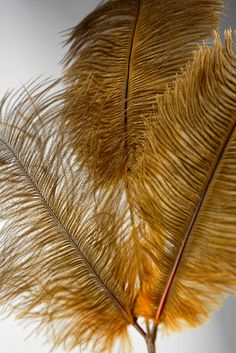 "Sienna Brown Ostrich  Feathers (3 feathers on each  28"" wire) $4.99 each / 6 for $4  each"