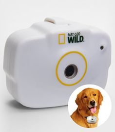 Camera to put on your dogs collar to see what they do through the day.