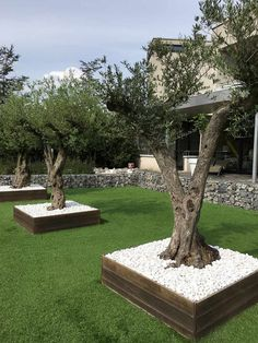 Home Garden Design, Backyard Garden Design, Home And Garden, Landscaping Around Trees, Front Yard Landscaping, Garden Beds, Garden Paths, Small Garden Landscape, Balcony Flowers