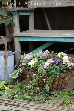 フローラのガーデニング・園芸作業日記-寄せ植え パンジー バスケット