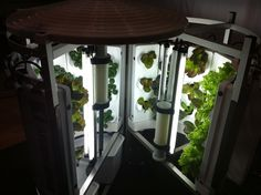 Aroma Gardens are amazing little hydroponic shelters where any restaurant or food business can keep a steady supply of herbs and baby lettuces growing.