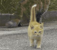 Le chat aventurier