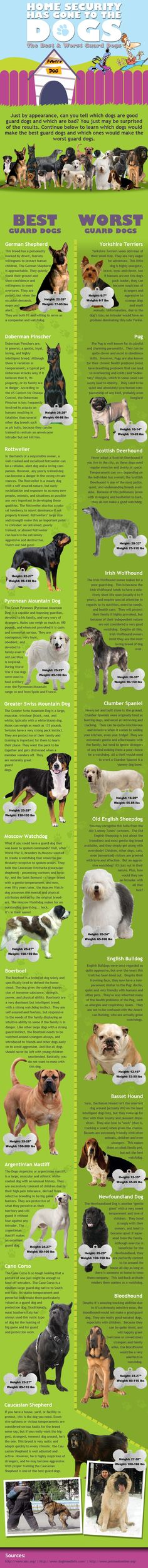 Best and Worst Guard Dogs - Infographic