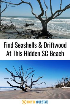 This beautiful hidden island beach in South Carolina is great for finding seashells and driftwood, offers unique forest remains, has some of the area's best hiking trails, and is a perfect summer picnic spot. Picnic Spot, Summer Picnic, Summer Travel, Time Travel, Places To Travel, Travel Destinations, Places To Go, South Carolina Coast, Hidden Beach
