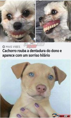 Imagens engraçadas para baixar gratuitamente - Imagens para Whatsapp Animal Jokes, Funny Animal Memes, Funny Animals, Cute Animals, Cute Dog Photos, Funny Dog Pictures, Funny Images, Wtf Funny, Funny Cute