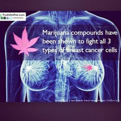 """New Research Shows How Marijuana Compound Can Reduce Tumor Growth In Cancer Patients.  Scientists have long known that compounds derived from marijuana have some cancer fighting properties but a recent discovery demonstrates how exactly one compound may fight tumors.  Published in the Journal of Biological Chemistry the research reveals two previously unknown """"signaling platforms"""" in cells that allow THC the psychoactive ingredient in cannabis known for producing the """"high"""" sensation to…"""