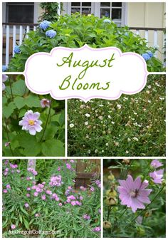 What to Plant for August Blooms: plan now for August and September blooms! An Oregon Cottage