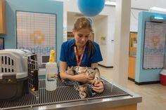 Demostremos todos los días afecto y respecto a nuestras fieles mascotas previniendo enfermedades ypadecimientos zoonóticos - http://plenilunia.com/prevencion/45819/45819/