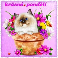 Solve krásné pondělí jigsaw puzzle online with 64 pieces Missing Piece, Large White, Cat Love, Deco, Good Morning, Jigsaw Puzzles, Teddy Bear, Animals, Water