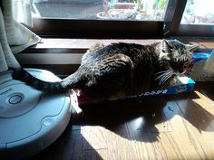 Today's cat on 29th Apr. 2012 by ganchan2, via Flickr