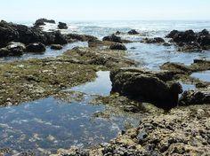 Laguna Beach - Glenn E. vedder Ecological Preserve
