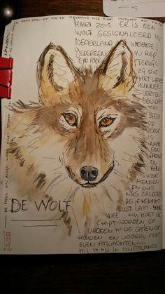 Het komt niet vaak voor, een wolf die door Nederland trekt. Best bijzonder. Kenners weten te vertellen dat hij op zoek is naar een maatje en niet gevaarlijk is. Hij is niet geïnteresseerd in en zelfs een beetje b ang van mensen. Aan de manier waarop hij loopt kun je zien....die wolf heeft een missie. Desondanks hebben een aantal mensen besloten in te moeten grijpen. Hij moet gevangen en gechipt worden. Heel belangrijk....schijnt.... Ondertussen is de wolf de grens over en in Duitsland. De…
