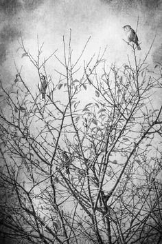 Before the Winter - fine art photography