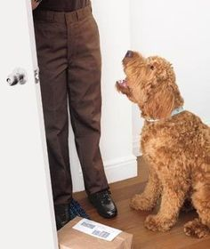 Decoding Your Dog's Behavior