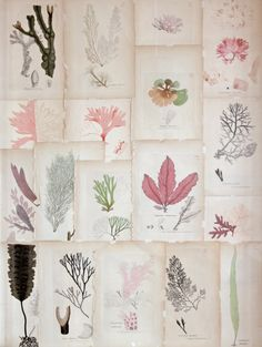 Vintage botanical prints. Collage. Gennine/flickr