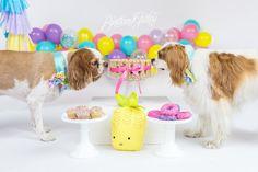 Dog Birthday Cake | Puppy Cake Smash | Dog Birthday Party Inspiration | One Stylish Party | Cavalier King Charles Spaniel | Cleveland, Ohio Studio | Start With The Best | Brittany Gidley Photography LLC