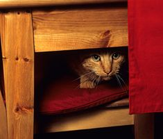 Trainer Mikkel Becker says that the key to getting your skittish cat to relax and like your guests is patience — and practice. Learn how here.
