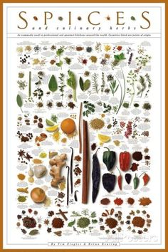 Spices and Culinary Herbs Poster bei AllPosters.de