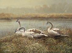 Tiere und Landschaft | Claus Rabba