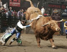 Bull riding is a dangerous sport. It is also one of the most popular rodeo events, both for the riders and the audience. Rodeo Rider, Rodeo Events, Bucking Bulls, Indian Horses, Rodeo Cowboys, Bullen, Charro, Bull Riders, Rough Riders