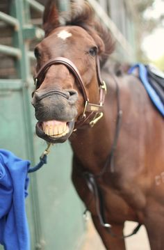 Our horses smile on command. :) This one has a really cute smile! #happyhorses