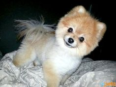 """UN-BEAR-ABLY CUTE - Lilly is a fan of her new """"teddy bear haircut"""" – and so are we!"""