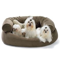 1000 Images About Dogs On Pinterest Pet Beds Comfy Couches And Pets