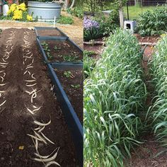 Improve Soil with Cereal Rye, a Fall Cover Crop - Organic Gardening - MOTHER EARTH NEWS