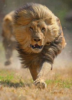 The truth is like a lion. You don't have to defend it. Let it loose. It will defend itself. ~ St. Augustine