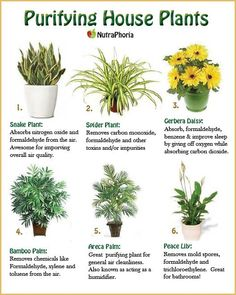 Purifying house plants Living Green www nutraphoria com House plants indoor, Plants, Air purifying p Best Indoor Plants, Indoor Garden, Garden Plants, Outdoor Gardens, Vegetable Garden, Garden Care, Decoration Plante, Inside Plants, House Plants Decor