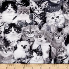 Cat Breeds Packed Cats Gray from @fabricdotcom  Designed by Keith Kimberlin for Elizabeth's Studio, this cotton print fabric is perfect for quilting, apparel, and home decor accents. Colors include black, white, and shades of grey.