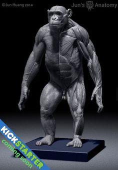Chimpanzee Anatomy Model 1/6th scale