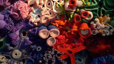Coral reef+mathematics+crochet=