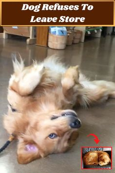 #Dog #Refuses #Leave #Store
