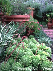 """Plant native and drought resistant plants...love the succulents. Succulents need a well drained soil they will not tolerate """"wet feet"""" Full sun. They make great container plants."""