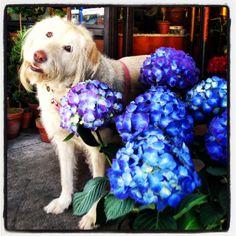 Roxy #zezeflowers Photographer Jane Drake Hale 2013