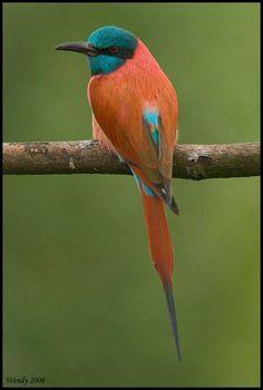 Orange and turquoise Birds https://www.facebook.com/WingedBeautiesBirds/photos/a.566878823481561.1073741828.566675060168604/923108917858548/?type=3&theater