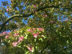 boombloemetjes