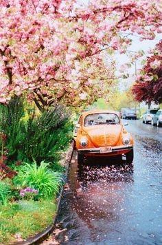 Magnolias & VW Bugs.