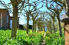 The Galloping Gardener: Roald Dahls garden openings this summer - follow in the footsteps of the BFG!