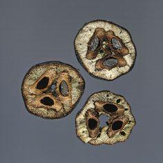Stilbocarpa polaris: fruits & seeds by Royal Tasmanian Botanical Gardens, via Flickr