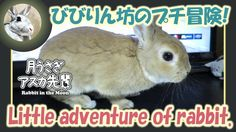 びびりん坊のプチ冒険!【ウサギのだいだい 】 2017年3月16日