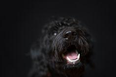 black dog pet photography