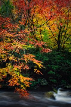 ~~Fall Splash ~ autumn colors along the Little River, Great Smoky Mountains National Park, Tennessee, by Charlie Choc~~
